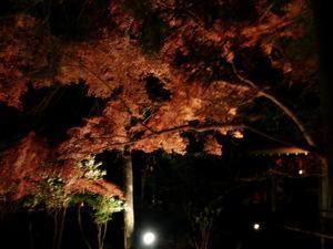 2012.11.25_紅葉ライトアップ 006.jpg