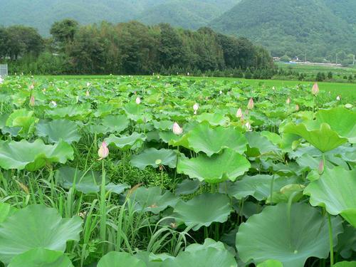 hashiranosawa.jpg
