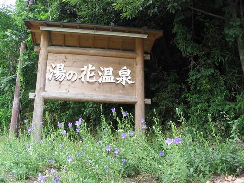 kikyouyunohana.JPG