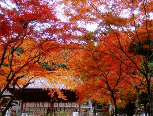 鍬山神社紅葉.JPG